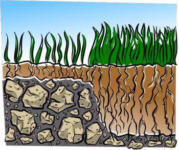A gyep talaj minősége